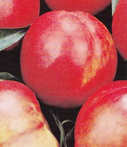 Stark Red Gold, Großfruchtige Nektarine