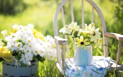 Gartentipps für Juli