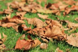 Gartentipps im Oktober, Laub rechen