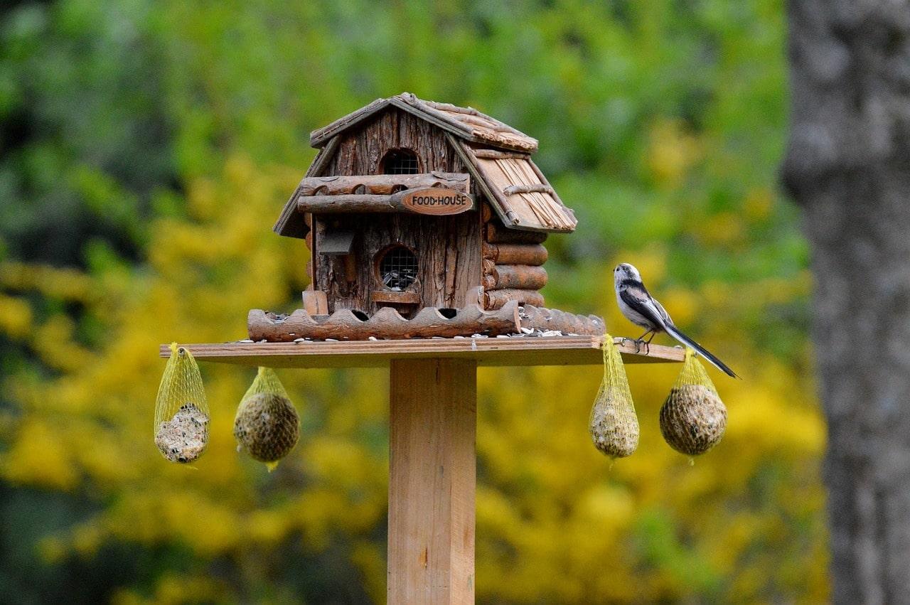 Vogelhäuschen - Gartentipps für Dezember