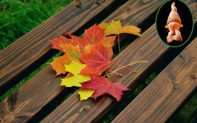 Warum verlieren die Bäume ihre Blätter?